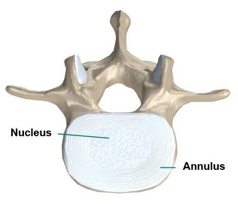 Lage rug anatomie